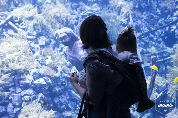 Volwassene en kind voor aquarium